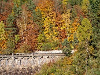 FOTKA - Barevné stromy u přehrady