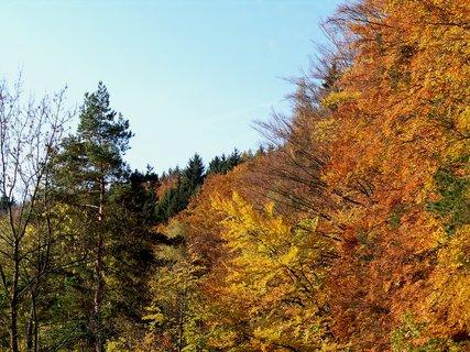 FOTKA - Říjen barví lístí do zlata, nevadí když občas spadne do bláta.