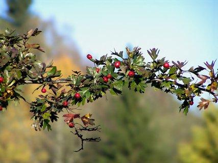FOTKA - Přišel podzim do zahrady, všechny barvy namíchá, s každým lístkem ví si rady barvy na něj nadýchá
