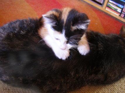 FOTKA - Přeprala jsem kočku!