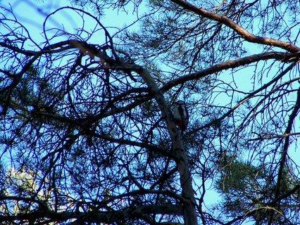 FOTKA - Ošetřovatel stromů