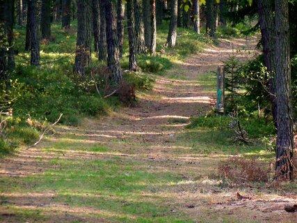 FOTKA - Procházka podzimním lesem