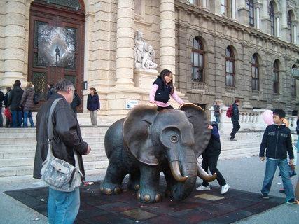 FOTKA - Slon- miláček dětí