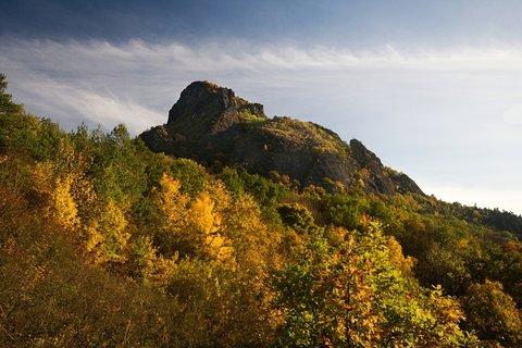 FOTKA - Bořeň podzimní