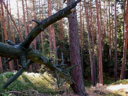 FOTKA - Slunečný podzim v lese