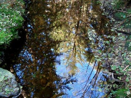 FOTKA - Zrcadlení v lesní tůni