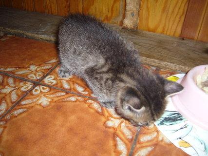 FOTKA - koťátka nová 45