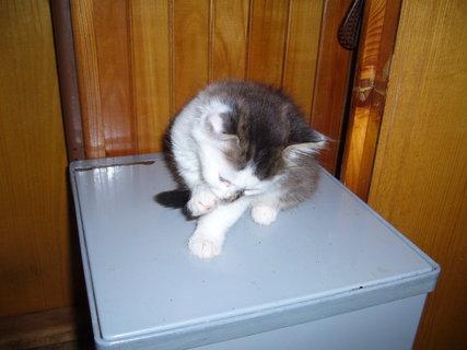 FOTKA - koťátka nová 48