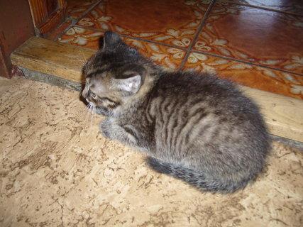 FOTKA - koťátka nová 49
