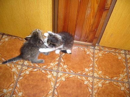 FOTKA - Kočičí hrátky