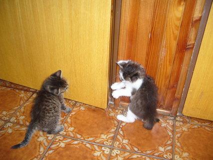 FOTKA - Kočičí hrátky 1