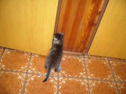 FOTKA - koťátka nová 50