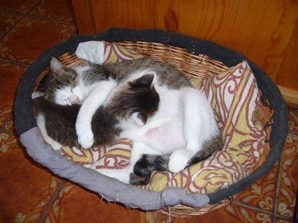 FOTKA - koťátka nová 51