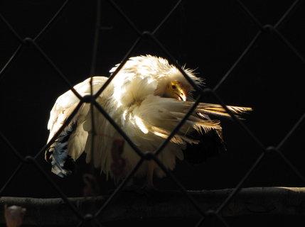 FOTKA - Ptačí krášlení