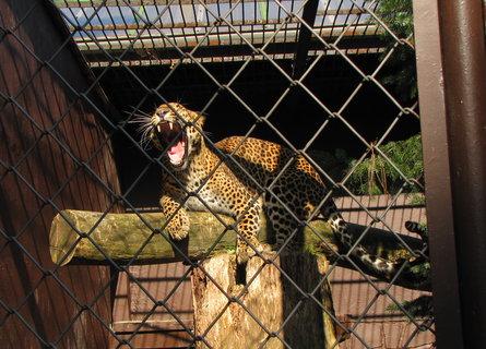 FOTKA - Tlama levharta cejlonského