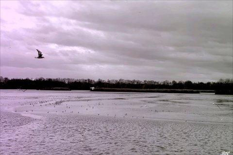 FOTKA - nad rybníkem