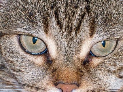 FOTKA - Kočka1