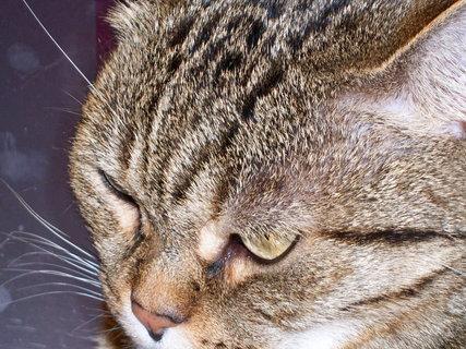 FOTKA - Kočka3.