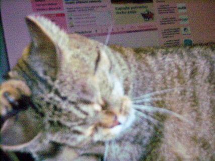 FOTKA - Kočka 6.