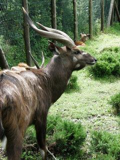 FOTKA - je to větší než jelen, co je to?