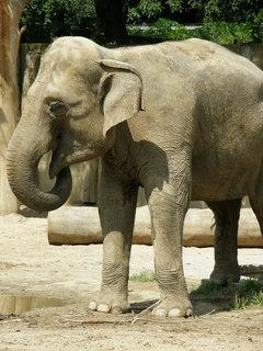 FOTKA - a zase slon