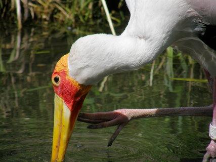 FOTKA - nádherný ptáček