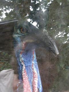 FOTKA - obrovský pták, že by emu?