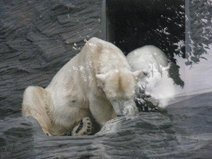 FOTKA - medvědí tlapička