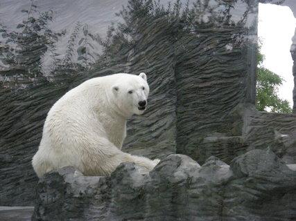FOTKA - miluju lední medvědy