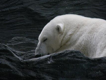 FOTKA - medvídek