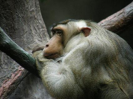 FOTKA - smutná opi