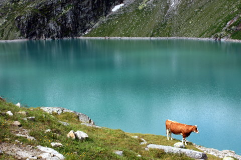 FOTKA - tak vysoko a kráva