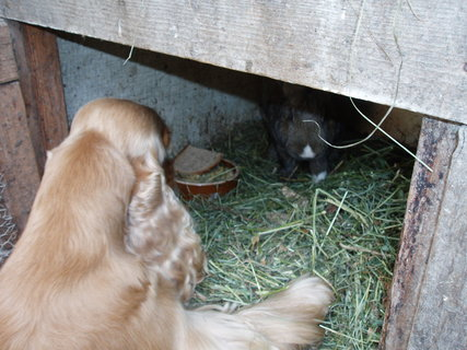 FOTKA - pes a králík
