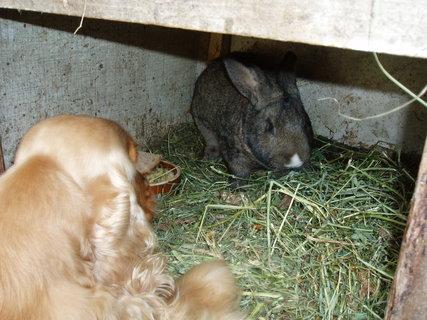 FOTKA - králík si nechce hrát