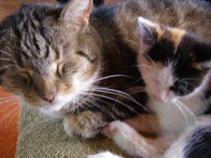 FOTKA - Max a kotě