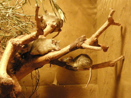 FOTKA - myšičky