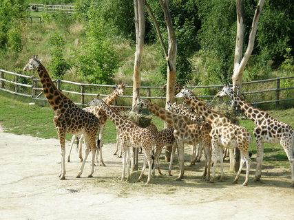 FOTKA - drbací kroužek žirafek