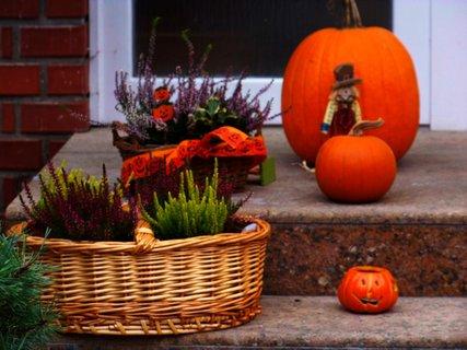 FOTKA - podzimní procházka 13.11. - moc se mi líbila taková výzdoba....