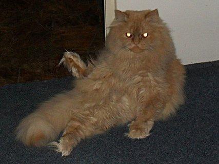 FOTKA - Garfieldův oblíbený posed