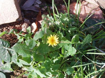 FOTKA - květ bodláku