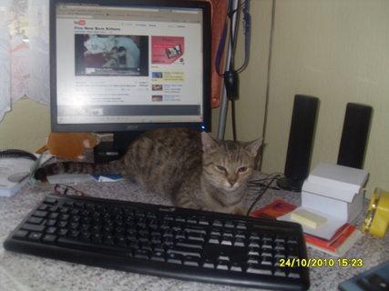 FOTKA - Kočka Betynka u compu