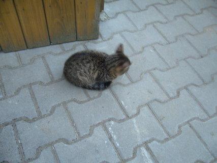 FOTKA - koťátka nová 54