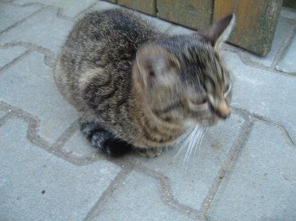FOTKA - koťátka nová 55