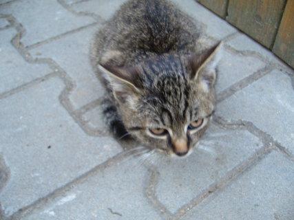 FOTKA - koťátka nová 56