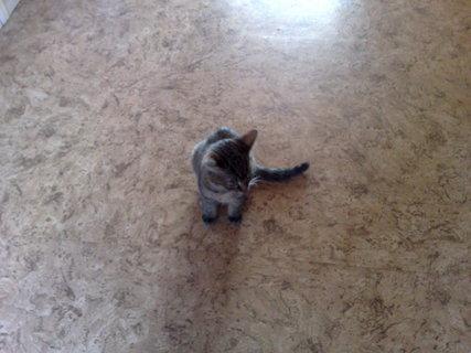 FOTKA - koťátka nová 57