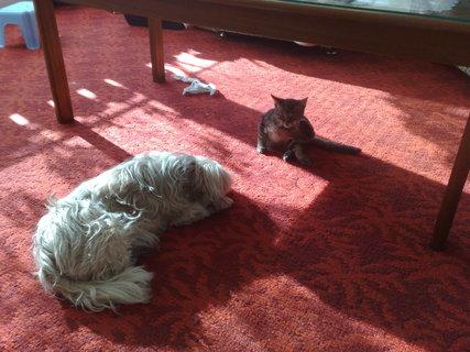 FOTKA - Koťáko s Dajou