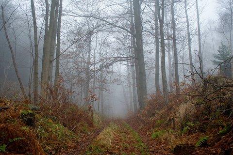 FOTKA - Cesta mlžným lesem