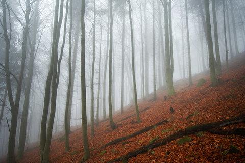 FOTKA - Bukový les