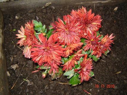 FOTKA - podzimni krasa