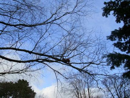 FOTKA - park plný veverek